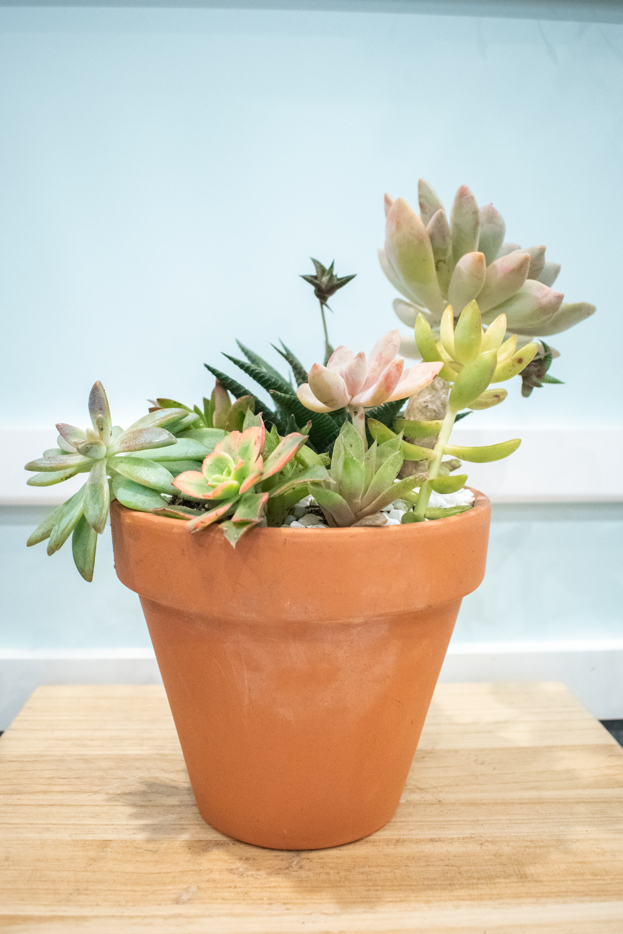 Terracotta Succulents