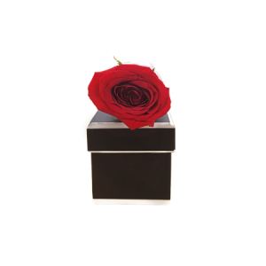 Single Rose in a Presentation Box (Online Special)