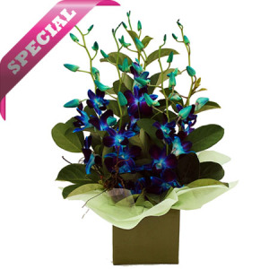 BLUE SINGAPORE ORCHID ARRANGEMENT