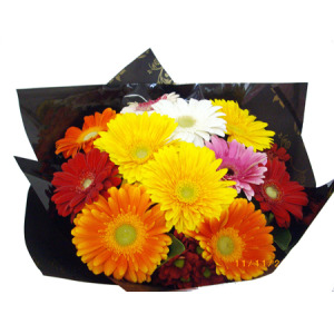 HAPPY MIX GERBERAS
